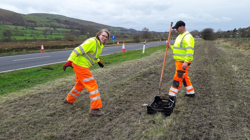 Mike Redston and Charlotte Scarisbrick helped with plug planting on the verges through AC Landscapes and Treeworks UK Ltd