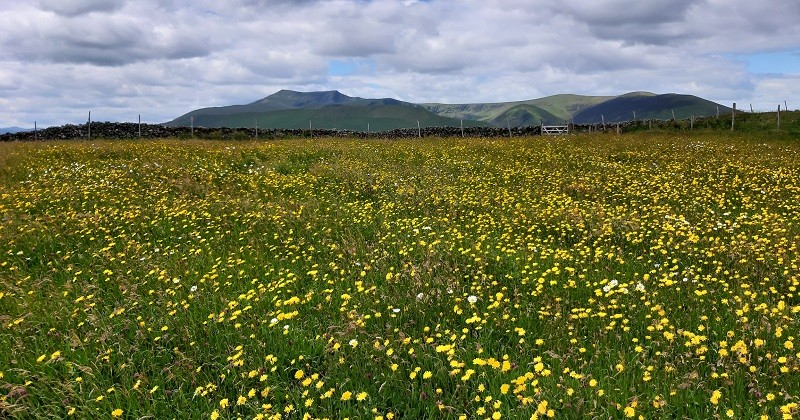 The species rich hay meadows at Eycott Hill Nature Reserve supports pollinating insects © Nichola Jackson