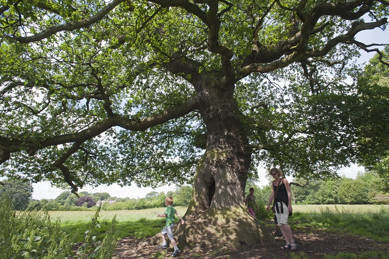 Acorn Bank Dalston Oak ©National Trust Images/Paul Harris