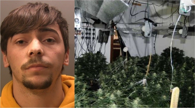 Albion Ukperaj and the cannabis farm