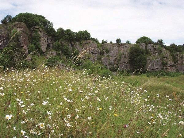 Clints Quarry Nature Reserve near Egremont. Sheep graze in the nature reserve, to manage the growth of scrub and brambles
