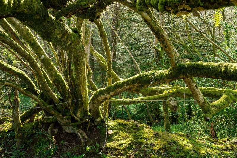 David Green, 'Old Hedge, Venton Wood, Devon' (2018)