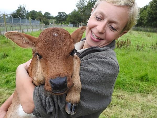 Head Keeper Vicky Jennings with the Wildlife Park's Dwarf Zebu calf