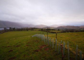 Hedgerow Planting Ullswater