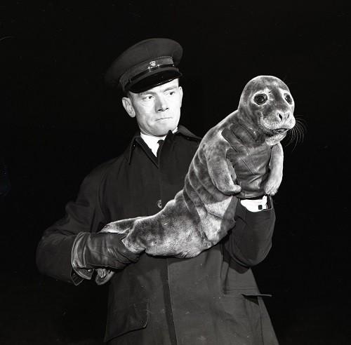 Ivor Nicholas - Rescued Baby Seal with Inspector F.G Haskins, RSPCA Whitehaven. November 1959
