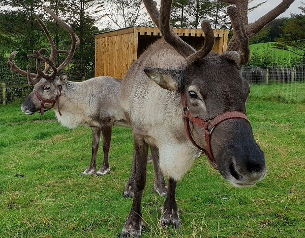 Reindeer from Cosy Logs at Ings