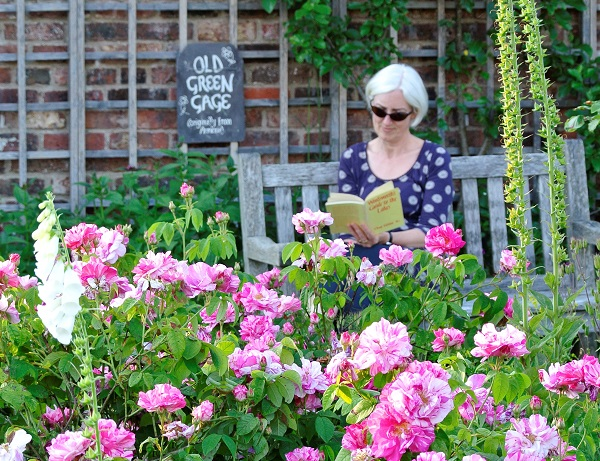 Relaxing among the roses in Wordsworth House garden by Val Corbett