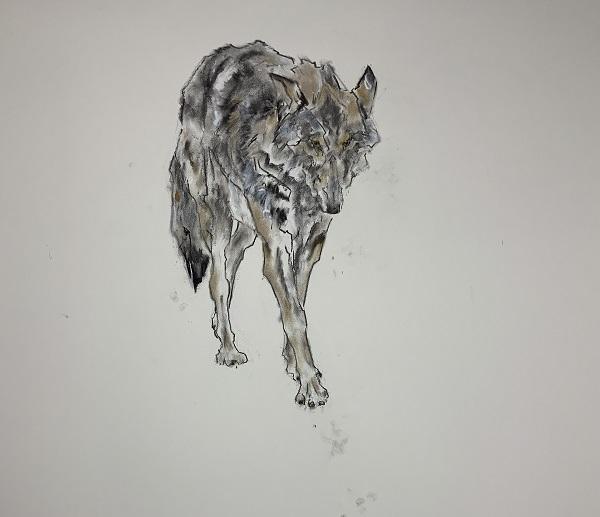 Sally Matthews Wolf