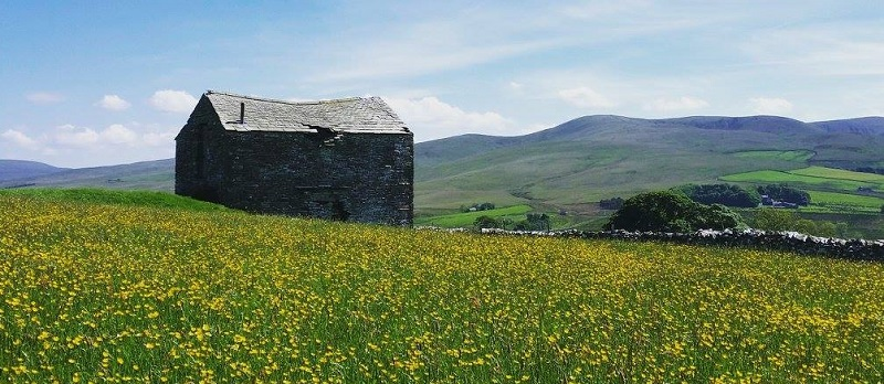 Westmorland Dales meadow and barn