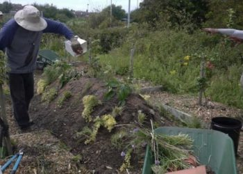 Allotment Soup: the Isle of Walney