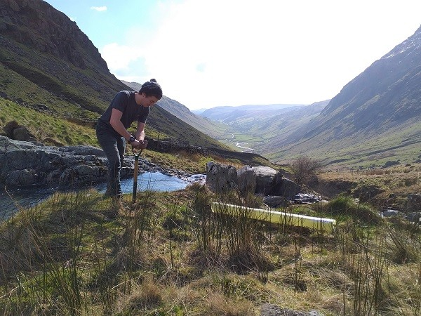 Returning aspen trees to the Cumbrian landscape