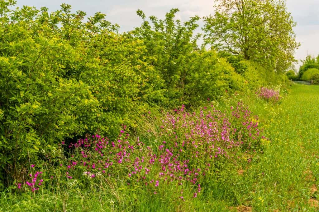 Thesecond round of funding for theprotection and creationofnative hedgerowsinCumbriaisnow open.