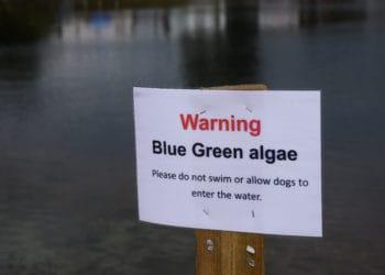 Blue green algae warning