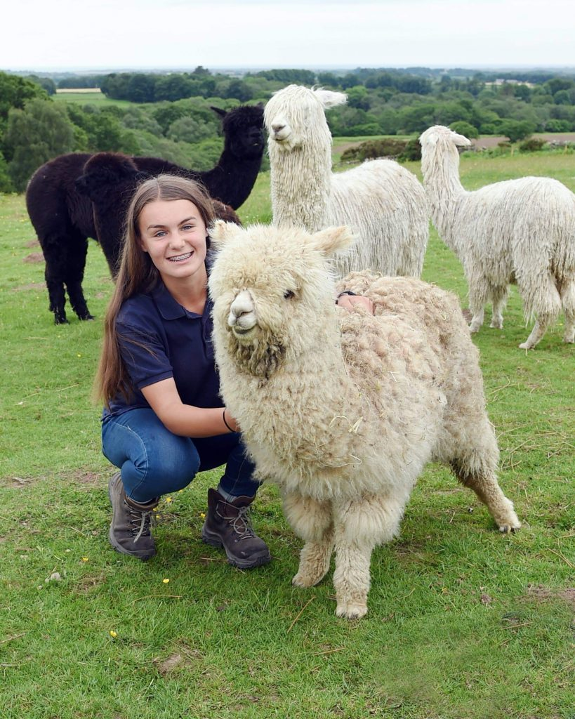 Woolly Farm staff member Abby Stamper pictured with one of the alpacas