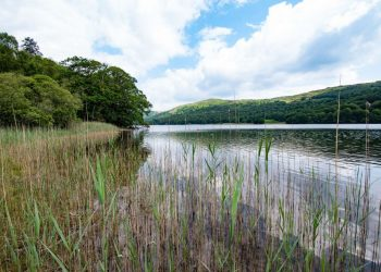 Brown Howe at Coniston Water
