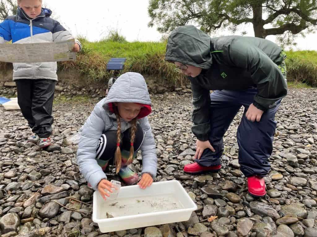 River dipping 1 (credit Ashfield Junior School)
