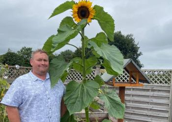 Jonathan Crisp with his sunflower