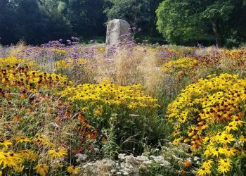 Summer planting at Noble's Rest