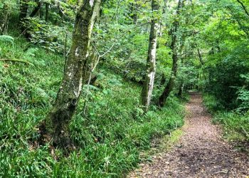Calder Woodland